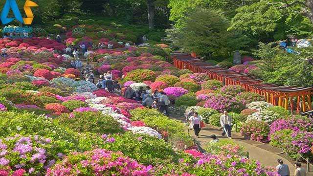 فستیوال گل آزالیا ویلمینگتون-الفبای سفر