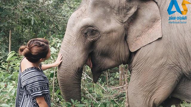 نزدیکی با فیل ها و لمس کردن آن ها در پارک طبیعی فیل در تایلند