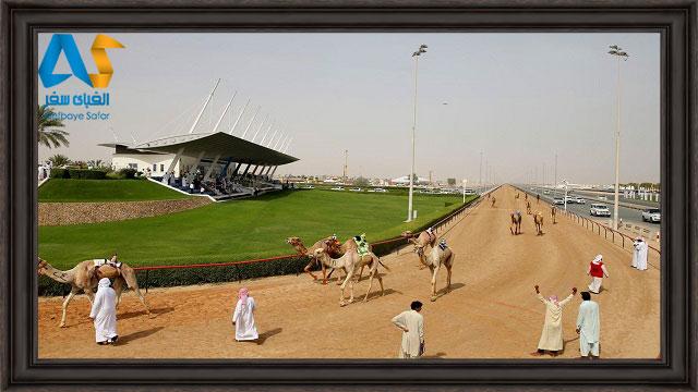 مسابقه شترها دبي