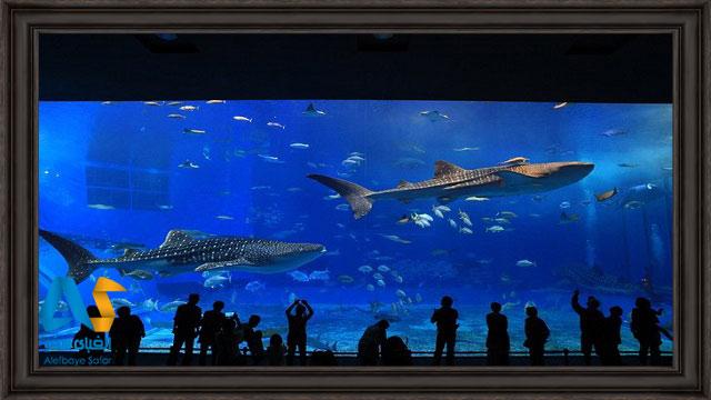 بازدیدکنندگان در حال بازدید از ماهی های بزرگ در بزرگترین آکواریوم جهان آکواریوم گرجستان