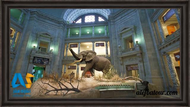 مجسمه فیل در موزه ملی مالدیو
